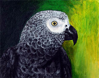 Amazon Gray bird oil pet painting by artist Donna Aldrich-Fontaine