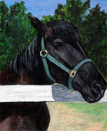jake-black-horse-oil-animal-portrait-by-fine-artist-donna-aldrich-fontaine
