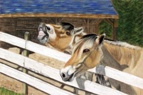 Laughing Fiords horse pastel pet painting by artist Donna Aldrich-Fontaine