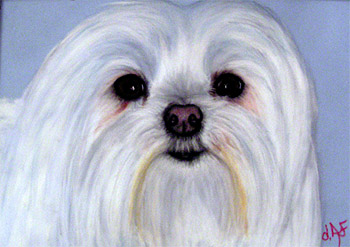 Fine Art Pet Portrait by Artist Donna Aldrich-Fontaine - Opus Dog.jpg